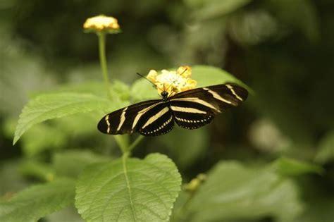 Insekten Garten