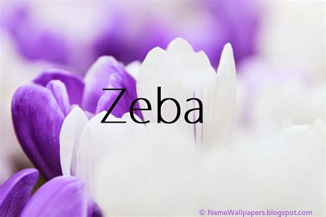 zeba  wallpaper gallery