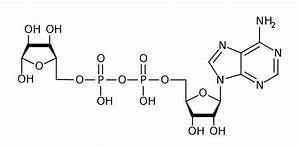 Adenosine Diphosphate Ribose