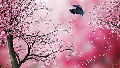 Sakura Pink Background Wallpapers Japanese Blossom Flower