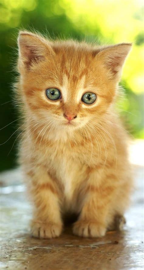 image chat mignon chaton roux cats chaton mignon chaton et chat