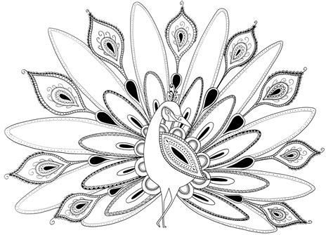 Peacock Drawing Color At Getdrawings.com