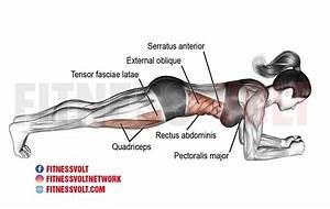 Front Plank  Abdominals   U2013 Fitness Volt