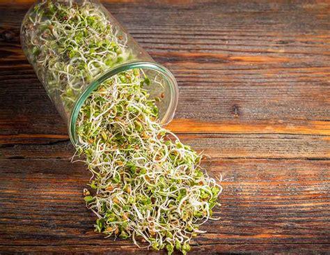 sprossen im glas sprossen ziehen im glas ohne keime im keimglas f 252 r die sprossenzucht