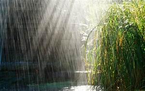 Beautiful Rainy Season On Grass Wallpaper HD Wallpaper ...