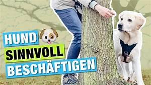 Gerüche Die Hunde Abschrecken : hundetraining objekte umrunden beibringen hund besch ftigen hundebesch ftigung youtube ~ Frokenaadalensverden.com Haus und Dekorationen