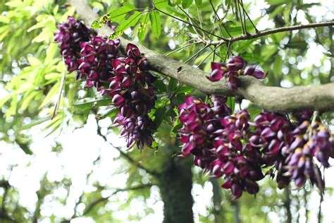 Free Images : tree nature outdoor branch fruit berry