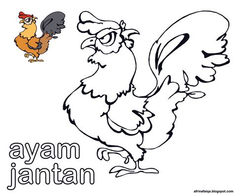 mewarnai gambar ayam jantan dunia afrina
