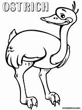 Ostrich Coloring Colorings sketch template