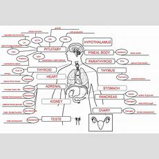 Endocrine System Concept Map  Nursing Nerd  Pinterest  Endocrine System, Teaching Tools And