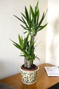 Plantes Exotiques D Intérieur : plante exotique d int rieur conseils prix et recommandations ~ Melissatoandfro.com Idées de Décoration