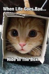 Funny Animal Memes Cats