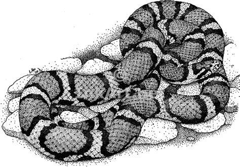 red milk snake stock art illustration
