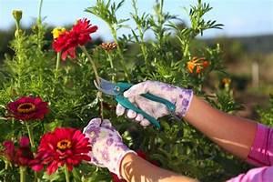 Comment Tailler Les Orchidées Pour Qu Elles Refleurissent : comment tailler les plantes vivaces willemse vous ~ Melissatoandfro.com Idées de Décoration