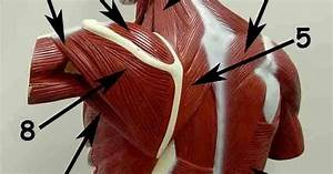 Teres Minor Stretch Teres Major And Minor