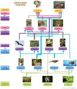 Everglades Food Web Diagram ( Flowchart) Creately