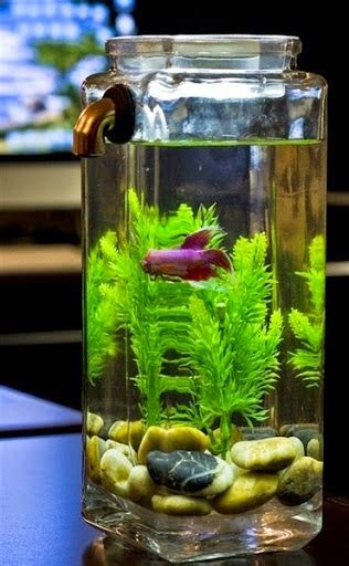 water   life strategic place put  aquarium