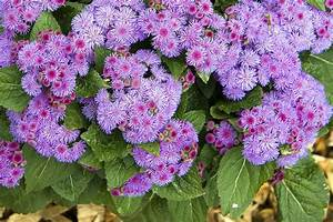 Butterfly Container Garden Flowers