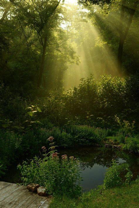 beautiful nature photography nature