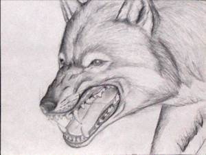 Snarling Wolf by Dragonsfire867 on DeviantArt