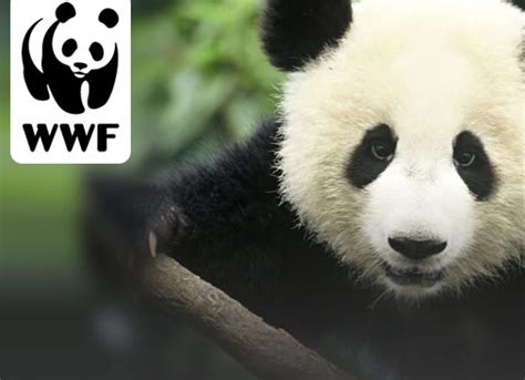 Adopt A Panda Gift With Wwf