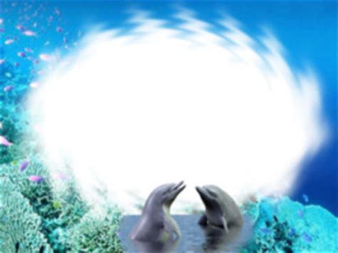 manycam effect dolphin border