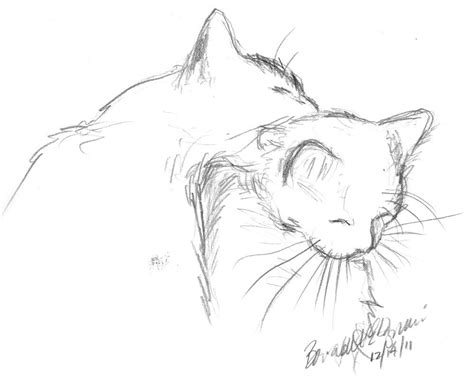 brotherly bath cat themed art   sketches pencil