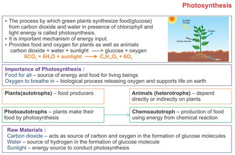 photosynthesis icse solutions  class  biology