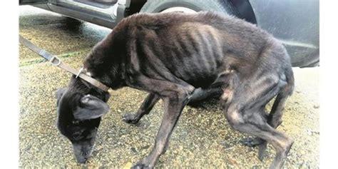 keine tierquaelerei aufgefundener hund ist krank www