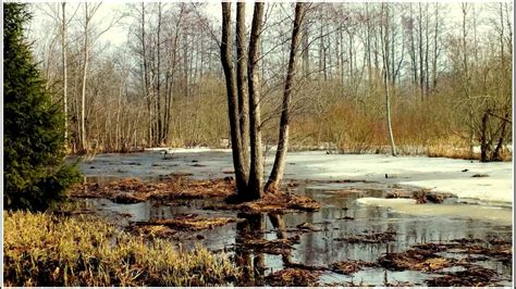 2013.03.03. Latvijas daba. - YouTube