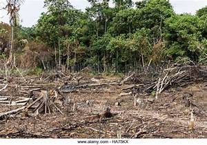 Amazon Deforestation Stock Photos & Amazon Deforestation ...