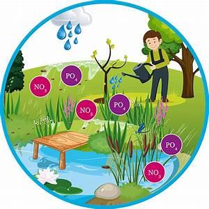 Grünes Wasser Im Gartenteich Hausmittel : wasseranalyse einfach und schnell von zu hause aus algen im teich wasser ~ Watch28wear.com Haus und Dekorationen