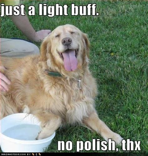 Golden Retriever Meme - golden retriever and baby meme www pixshark com images galleries with a bite