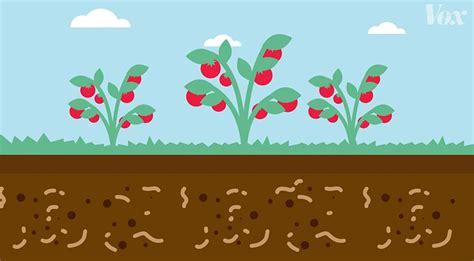 soil microfauna dirt secret growing explainer ages smart history health
