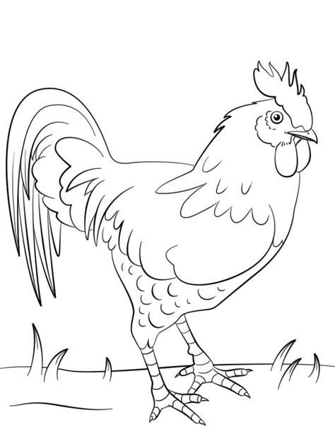koleksi sketsa mewarnai gambar ayam terbaik