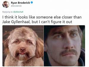 This Dog Has A Human Face And It's Freaking People Out