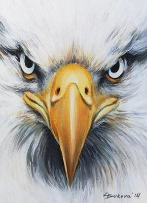 aceo original art eagle close  face bird detailed oil