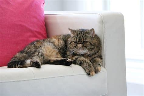 katze pinkelt auf sofa hilfe katze pinkelt