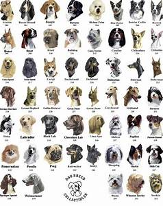 Dogs, Everything you must know