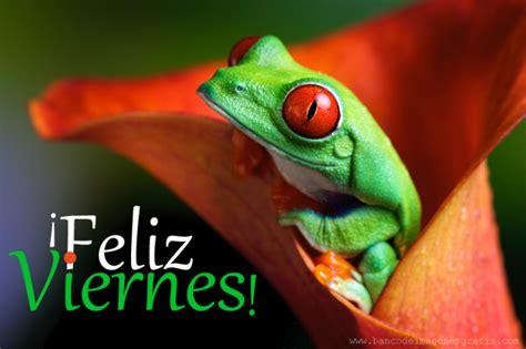 imagenes de animales graciosos  frases lindas de feliz