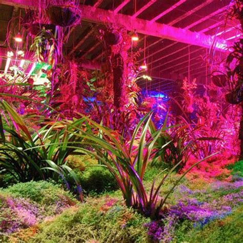 grow tips for led grow lights dorm grow