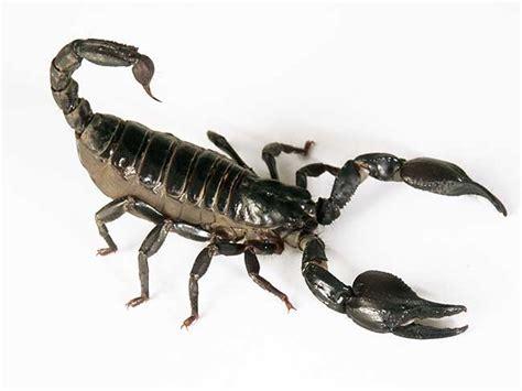 tageshoroskop skorpion single tageshoroskop skorpion horoskop heute skorpion kostenlos