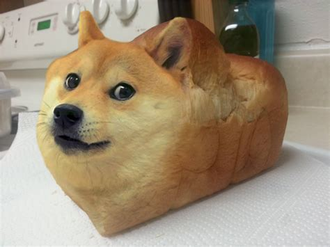 dear reddit give   day  daily doge bread dogecoin