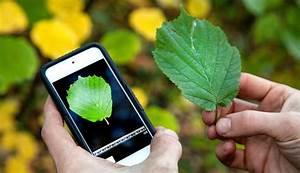 Pflanzen Bestimmen Mithilfe Des Smartphones Die Besten 8