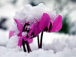Blumen Im Winter : der ziergarten im winter naturagart park aktuell ~ Eleganceandgraceweddings.com Haus und Dekorationen