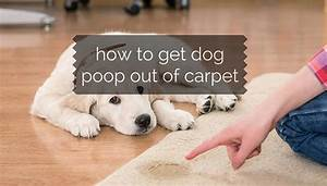 how to get dog poop out of carpet with minimal efforts With how to clean up dog diarrhea on wood floor