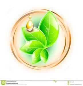 Drop Leaf Essential Oil