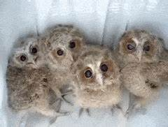 funny owls GIFs Search   Find, Make & Share Gfycat GIFs