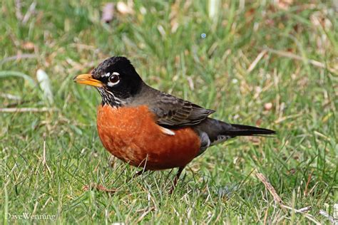 the robins of bowman bay