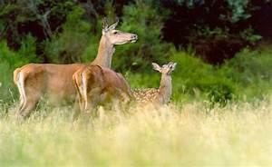 Tiere Der Laubwlder Nationalpark Eifel